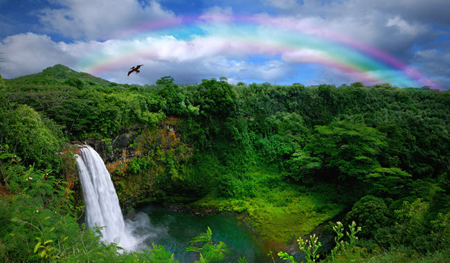 Kauai Waterfall With Rainbow.